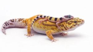 Химкинский питомник рептилий